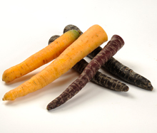 Paarse en gele wortelen
